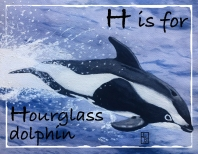 H-Hourglass dolphin