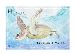 Hawksbill