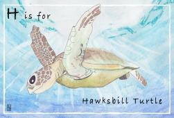 Hawksbill2